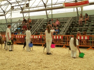 Sam (3rd, holding blue bucket) in the Junior Showmanship Class. Spirit's head can be seen on the far right.