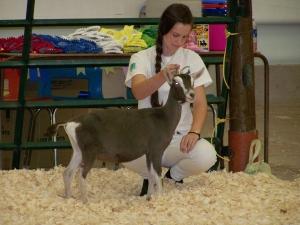 Open Goat Show 057