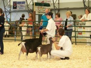 Open Goat Show 128