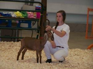Open Goat Show 136